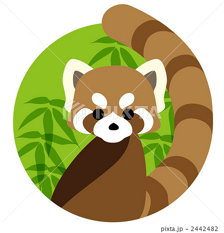 レッサーパンダの画像 p1_17