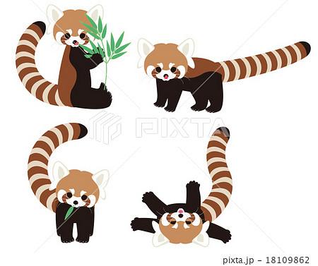 レッサーパンダの画像 p1_11