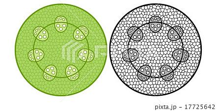 維管束植物のイラスト素材 - PIX...
