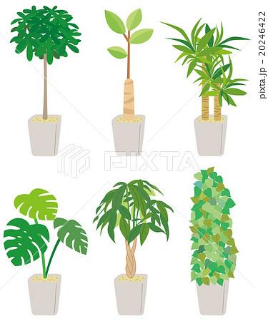 葉 ベクター モンステラ 観葉植物のイラスト素材 Pixta