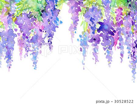 藤の花 フジ 藤 5月のイラスト素材 Pixta