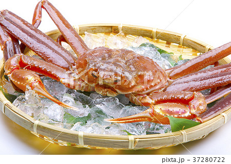 松葉蟹の写真素材 - PIXTA