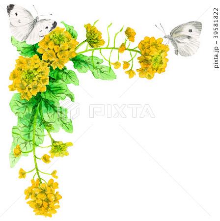 モンシロチョウのイラスト素材 Pixta