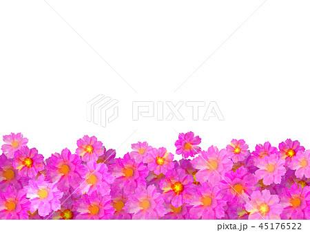コスモス畑のイラスト素材 Pixta