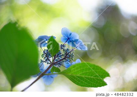 6月の花の写真素材 Pixta